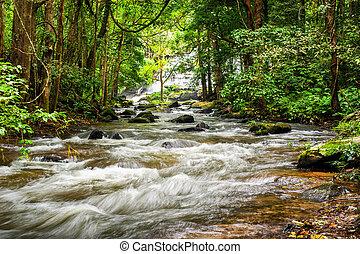 tropicale, fluente, paesaggio fiume, foresta pluviale