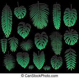 tropicale, foglie, set, nero