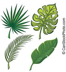 tropicale, foglie, set