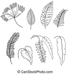 tropicale, hand-drawn, set, foglie
