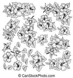 tropicale, ibisco, fiori, collezione, set, bianco, elements., fondo.