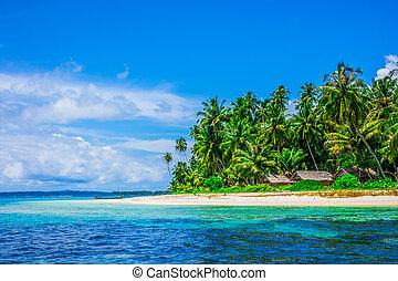 tropicale, isola, paesaggio