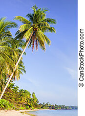 tropicale, isola, scenario