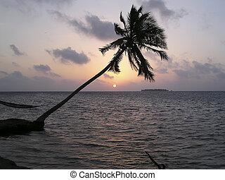 tropicale, isole, maldive, spiaggia tramonto
