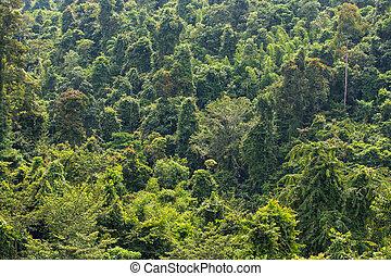 tropicale, khao, sok, foresta pluviale, parco, tailandia, nazionale