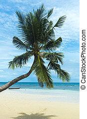 tropicale, mare