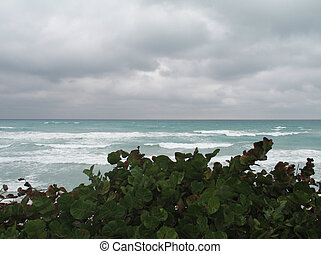 tropicale, marina
