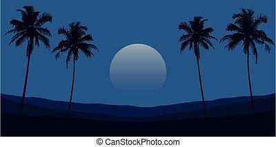 tropicale, montagne, albero, paesaggio, notte palma