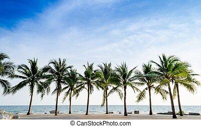 tropicale, palma, noce di cocco, spiaggia