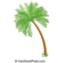 tropicale, palma, sopra, bianco