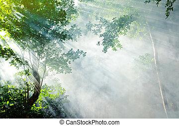 tropicale, raggio sole, foresta