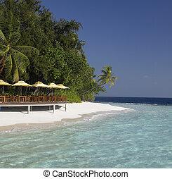 tropicale, ricorso, spiaggia, -, maldive