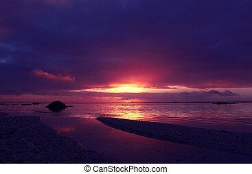 tropicale, rosa, tramonto