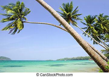 tropicale, scenario