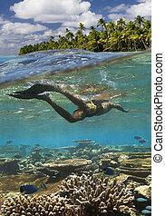 tropicale, -, scogliera, polynesia francese