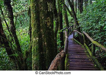 tropicale, sentiero, foresta legno, pioggia