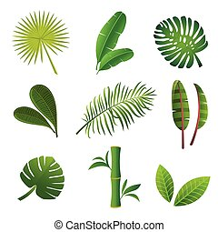 tropicale, set., piante