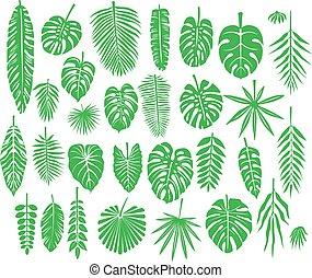 tropicale, silhouette, set, foglie