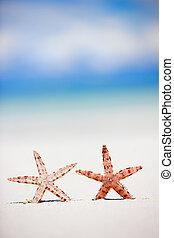 tropicale, spiaggia, due,  starfish
