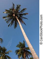 tropicale, spiaggia palma, albero