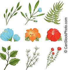 tropicale, tradizionale, fiori, set
