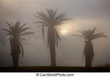 tropicale, tramonto, lunatico