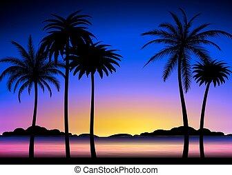 tropicale, tramonto, silhouette, palme