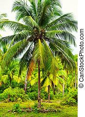 tropico, giungla