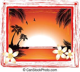 tropico, spiaggia