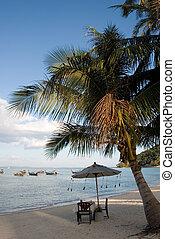 tropikalna plaża, dłoń drzewo