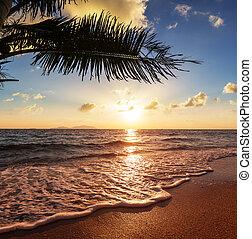tropikalna plaża