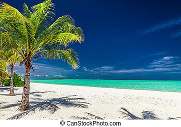 tropikalna plaża, zdumiewający, dłoń drzewa
