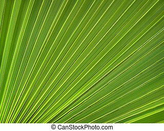 tropikalna roślina, liść, closeup