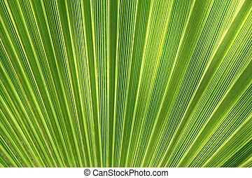 tropikalna roślina, liść, struktura