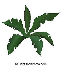 tropikalna roślina