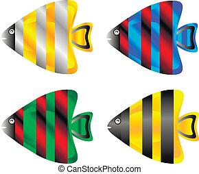 tropikalna ryba, komplet
