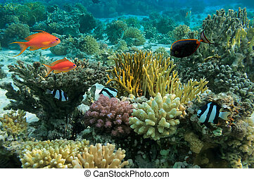 tropikalna ryba, koralikowa rafa