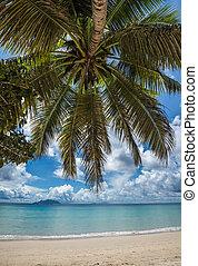 tropikalna wyspa, amant, seychelles, vallon, plaża, anse, ...