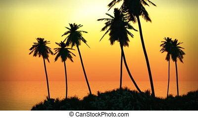 tropikalna wyspa, dłoń, (1063), zachód słońca