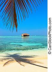 tropikalna wyspa, malediwy