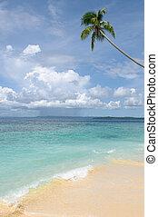 tropikalna wyspa, -, morze, niebo, i, dłoń drzewa