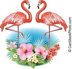 tropikalne kwiecie, flamingi, rozmieszczenie