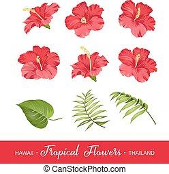 tropikalne kwiecie, komplet, elementy