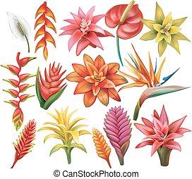 tropikalne kwiecie, komplet