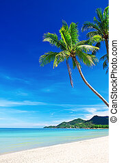 tropikalny, biały piasek, plaża, z, dłoń drzewa