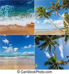 tropikalny, collage, plaża