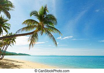 tropikalny, dłoń, orzech kokosowy, plaża, drzewa