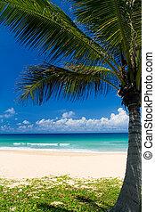 tropikalny, dłoń plaża, drzewo