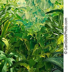 tropikalny, dżungla, tło