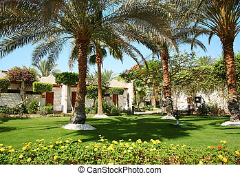 tropikalny, dom, palmtree